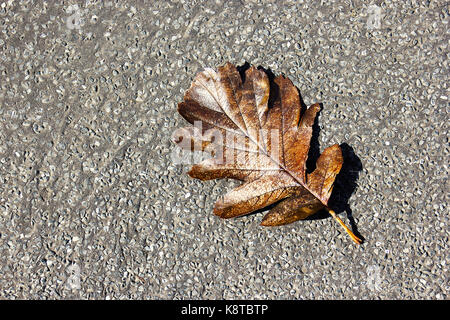 brown leaf resting on tarmac pavement - Stock Photo