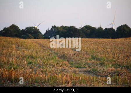 Field in the evening sun - Stock Photo