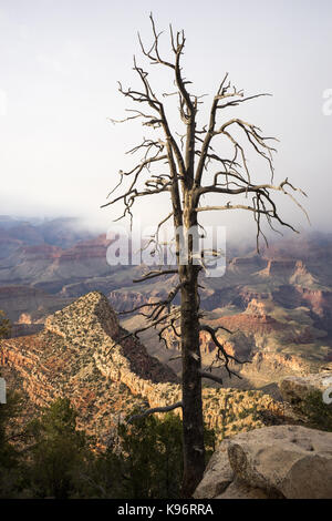 A view of The Grand Canyon from Grandview Point. - Stock Photo