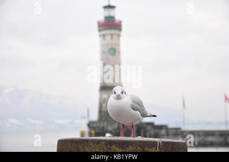 Germany, Bavaria, Lake of Constance, Lindau, harbour, lighthouse, gull in the foreground, - Stock Photo