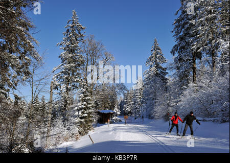 France, Haut Rhin, Hautes Vosges, The ski resort of the Lac Blanc, Col du Calvaire, slopes of cross country skiing - Stock Photo