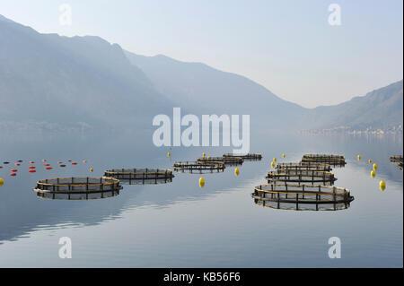 Montenegro, Adriatic coast, Kotor bay, Aquacultur - Stock Photo