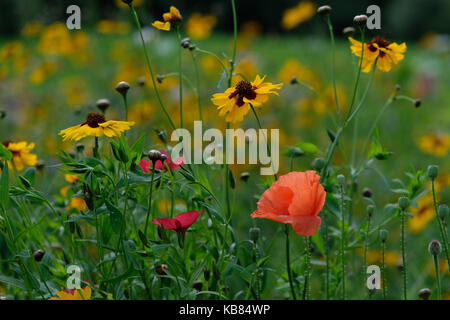 Close up of a variety of wild flowers, taken on a sunny day in summer in Eastcote, UK - Stock Photo