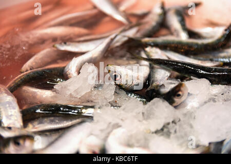 Close-Up Of Freshly Caught Sardines With Red Colored Ice From Blood In The Fish Market - Stock Photo