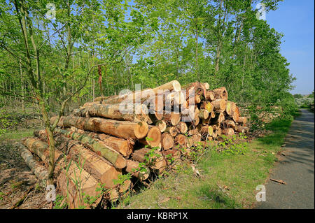 Pile of wood, North Rhine-Westphalia, Germany   Holzstapel an Waldrand, Nordrhein-Westfalen, Deutschland - Stock Photo