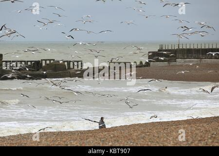 Hastings, East Sussex, UK. 1st October 2017. Local fisherman is seen dragging leftovers for the seagulls to feed - Stock Photo
