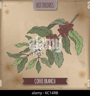 Coffee branch color sketch with beans and flowers on vintage background. Hot drinks collection. - Stock Photo