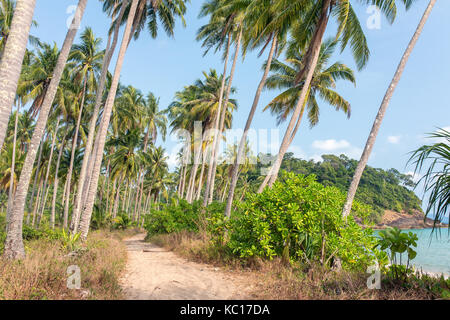 Palm trees near the beach on Koh Chang island in Thailand - Stock Photo