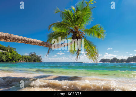 The palm tree on beautiful beach. - Stock Photo