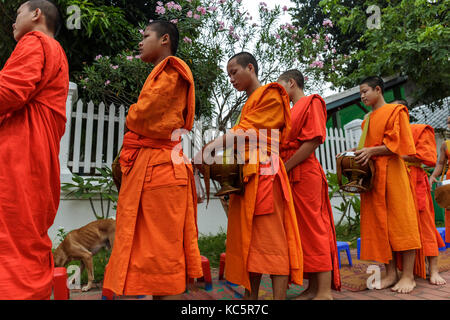 LUANG PRABANG, LAOS - 9/23/2017: Buddhist monks collect alms in Luang Prabang, Laos - Stock Photo