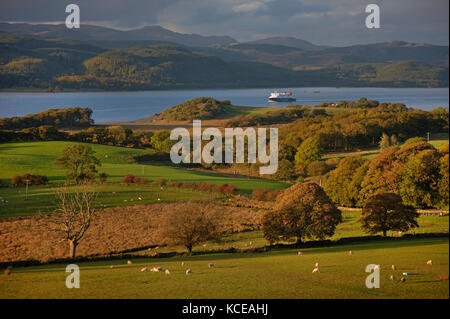 MV Finlaggan in West Loch, Nr Tarbert, Kintyre, Argyll - Stock Photo