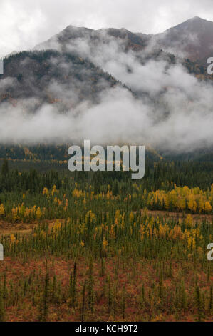 Scenic of autumn tundra along Highway 1 near Tok, Alaska, North America - Stock Photo