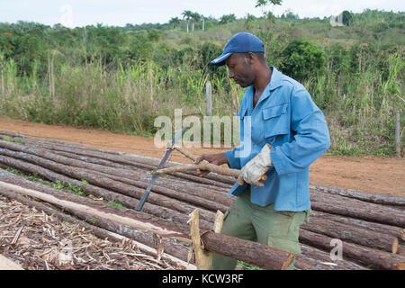 Man debarking logs in Trinidad,  Cuba - Stock Photo