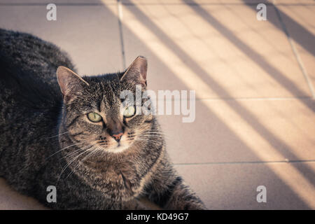 Cat lying on a balcony, posing to a photo - Stock Photo