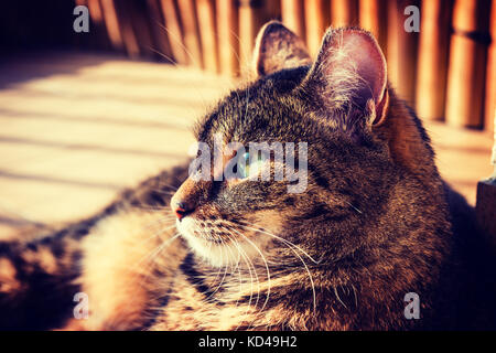 Cat lying on a balcony, posing to a photo. Vignette, high contrast photo - Stock Photo