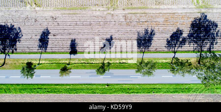 Vertical aerial image, trees on the roadside, strong shadows, abstract effect - Stock Photo