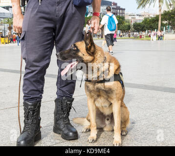 Policeman with Police dog in Spain - Stock Photo