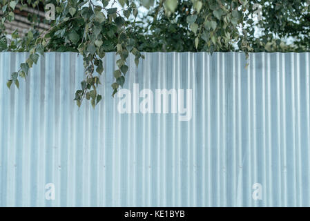 Fence in nature behind the site, in the autumn day, a branch of green deer from the top. Metal profile. - Stock Photo