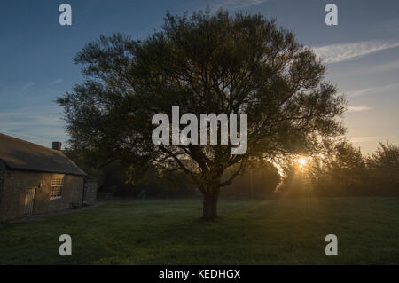 Early morning sun rays  shining through trees, crisp and cold dawn - photos - Stock Photo