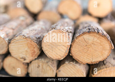Thanaka wood close-up. Tanaka is Burmese tradition cosmetic made from bark of tanaka tree. - Stock Photo