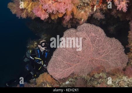 Female scuba diver swim near coral reef - Stock Photo