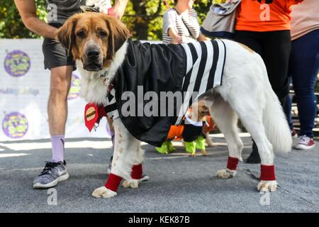 New York, United States. 21st Oct, 2017. NEW YORK, NY - OCTOBER 21: Dogs in costumes attend the 27th Annual Tompkins - Stock Photo