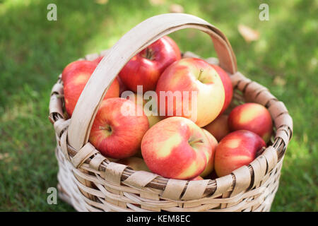 Red juicy apples in a wooden basket - Stock Photo