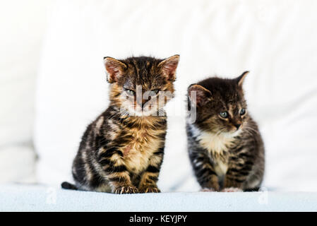 Two small and cute kittens sitting on the couch at home. - Stock Photo