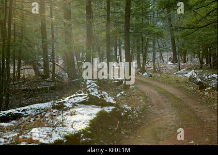 Dirt road through a winter evergreen forest with light snow on the ground curving away between the trees - Stock Photo