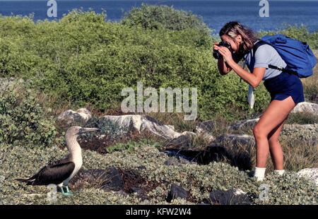 A blue-footed booby (Sula nebouxii) poses for a female tourist who takes the opportunity to shoot a close-up photograph - Stock Photo