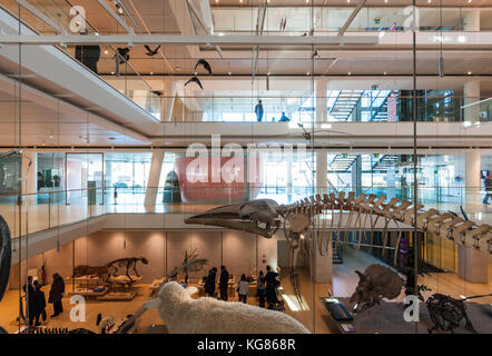 Grand Hall of the MUSE Museo delle Scienze Science Museum in Trento, northern Italy, designed in 2013 by Renzo Piano - Stock Photo