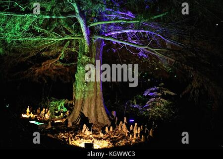 Syon Park the enchanted forest 2017 - Stock Photo