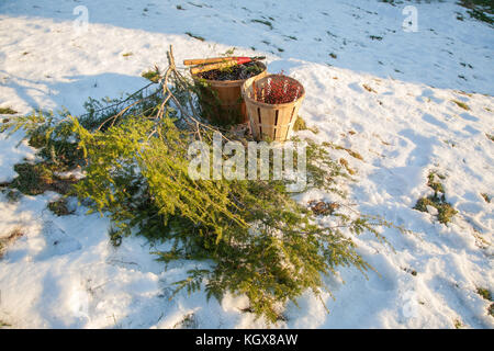 Basket, Pine Cones and Pine Branches for Handmade Wreath - Stock Photo