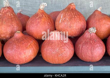 Harvested Red Kuri squash 'Cucurbita maxima'. - Stock Photo