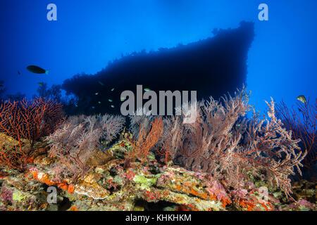 Coral Reef of Sea Fan, Gorgonaria, Christmas Island, Australia - Stock Photo
