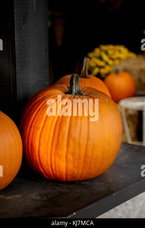 Fresh Pumpkins - Stock Photo