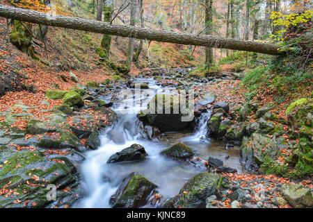 Fallen fir tree over milky stream of mountain creek with wet, slippery rocks overgrown with moss in autumn - Stock Photo
