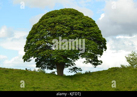 Ancient tree near a Neolithic site - Stock Photo