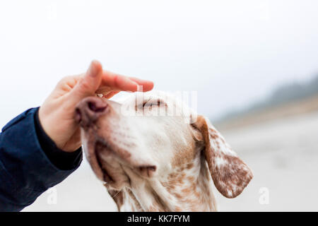 Breege, Germany, a dog enjoys petting - Stock Photo