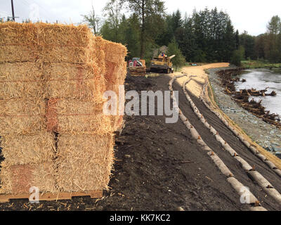 It sure looks like hay but it's actually woodstrand mulch. The mulch is used along the newly reinforced bank of - Stock Photo