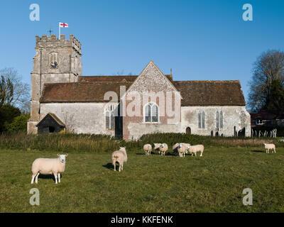 St Peters Church Soberton Hampshire UK - Sheep grazing in early morning winter sunlight - Stock Photo