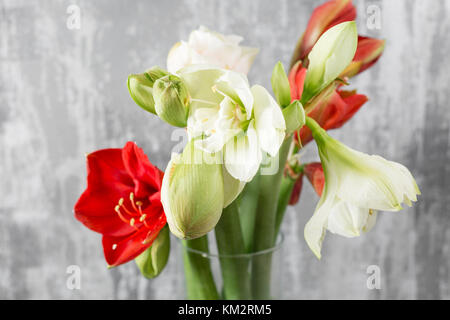 Winter flowers. Amaryllis in a vase watering can standing on a wooden table. On the background old gray wall art. - Stock Photo