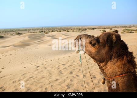 camel sitting khuri dunes in thar desert near jaisalmer in rajasthan state in india - Stock Photo