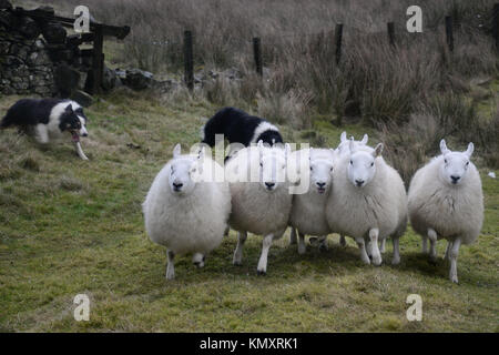 Shepherding in the Yarrow Valley, Selkirkshire, Scottish Borders - Stock Photo