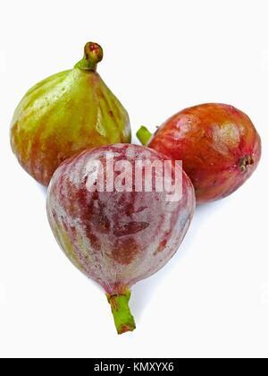 Fig fruit  Ficus carica L  Moraceae - Stock Photo
