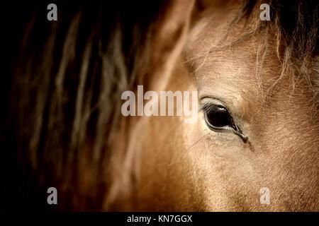 Close-up eye of Arabian bay horse - Stock Photo