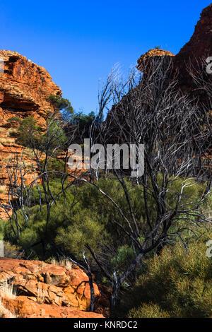 Watarrka (Kings Canyon) National Park, Northern Territory, Australia. - Stock Photo