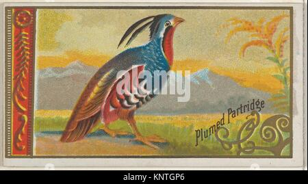Plumed Partridge, from the Game Birds series (N13) for Allen & Ginter Cigarettes Brands. Publisher: Issued by Allen - Stock Photo