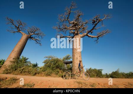 A boy and his rickshaw, Avenue of the Baobabs, Madagascar. - Stock Photo