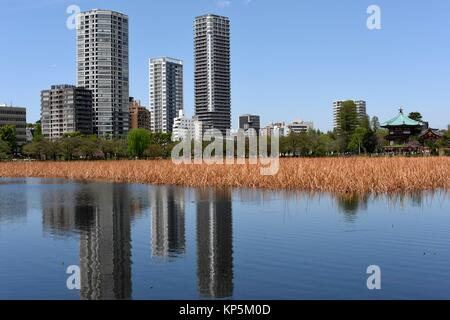 Shinobazu Pond in Ueno park and Tokyo skyline, Japan,Asia. - Stock Photo